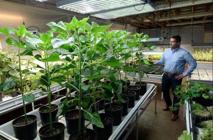 Наноудобрения Aqua-Yield — большой эффект от «самой маленькой инновации в сельском хозяйстве»