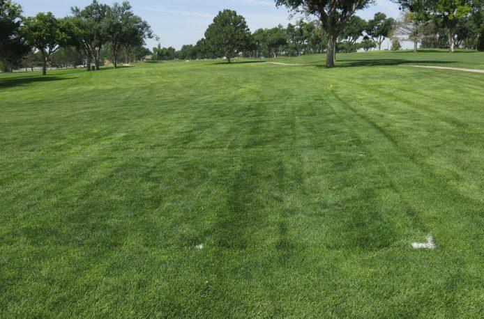 В штате Флорида компания Anuvia анонсировала свое новое удобрение для газонов на основе человеческих и пищевых отходов