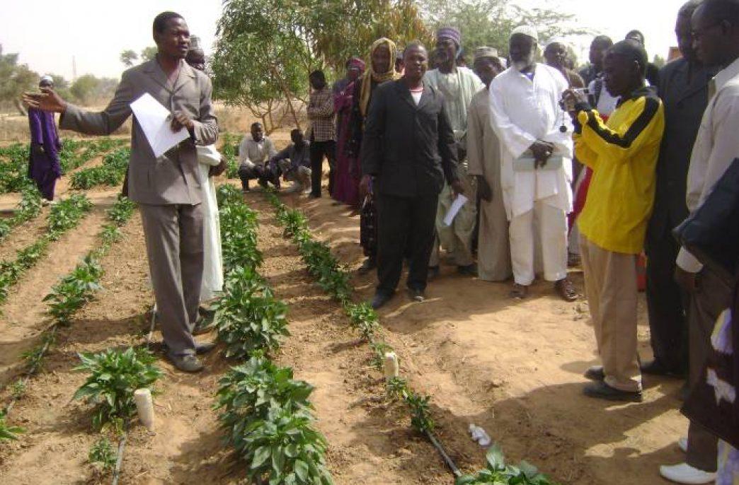 Биотехнологические решения компании Contec Global Agro поднимут сельское хозяйство Нигерии на новый уровень