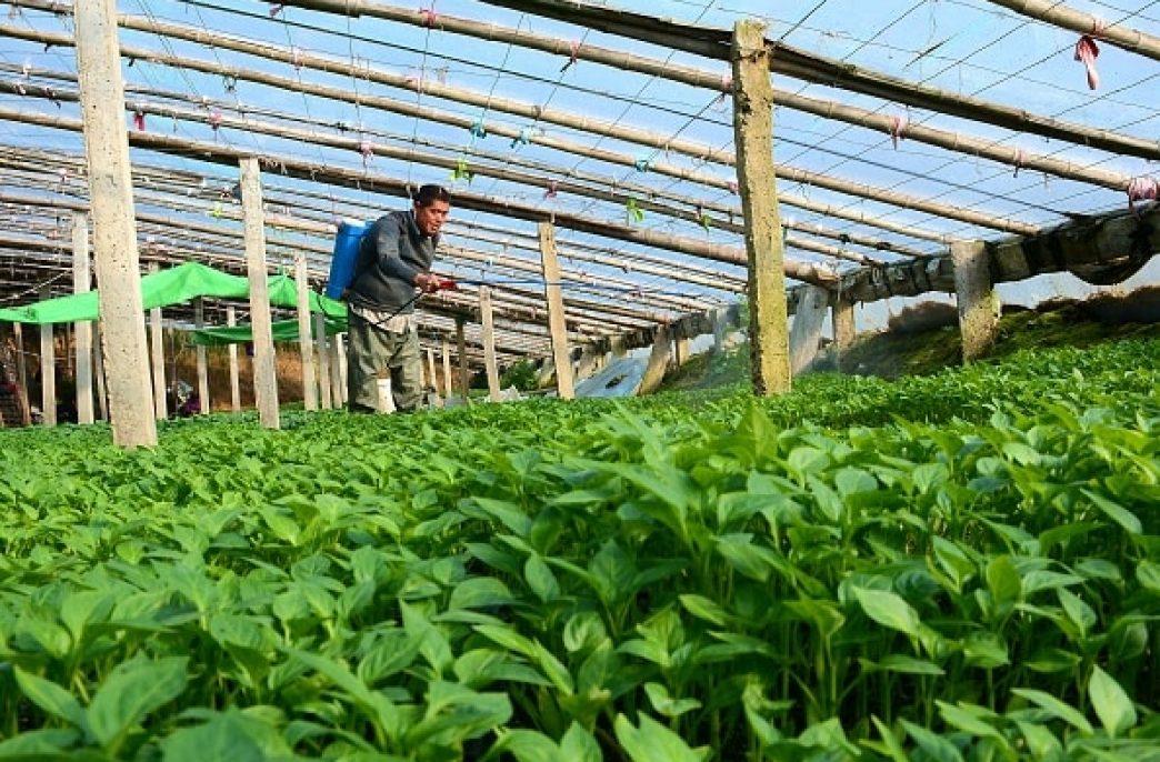 Kiwa Bio-Tech построит три новых завода по производству органических удобрений в Китае