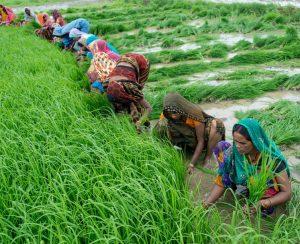 Индия намерена изменить схему субсидирования сельскохозяйственных удобрений
