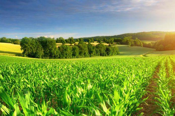 30 марта в Москве состоялась конференция: «Органическое сельское хозяйство – где деньги и где иллюзии».