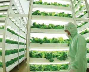 Фермы будущего могут стать подземными