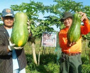 В Филиппинах набирает популярность новое органическое удобрение на основе лигнита