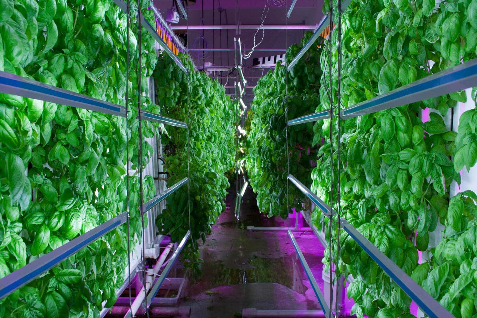 vertical farm abstract Lastly, vertical farming is inherently more sustainable by stacking farms vertically, the productivity per unit of land can be many times higher and arable land can be saved for other purposes.