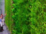 Вертикальные фермы могут стать основой для экологически устойчивого агропромышленного комплекса в будущем