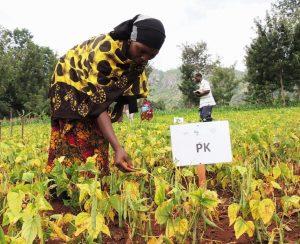 В Танзании планируется строительство мега-завода по выпуску минеральных удобрений