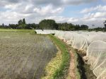 Экологичность, пермакультура и органическое сельское хозяйство в Индонезии