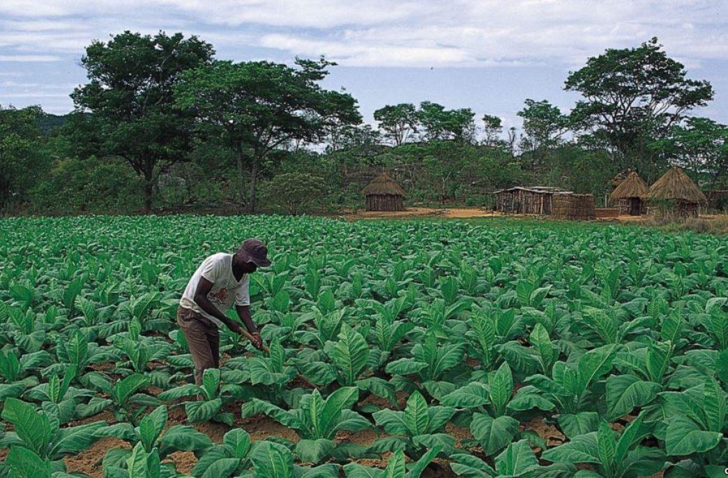 Дефицит удобрений в Зимбабве не исчезает