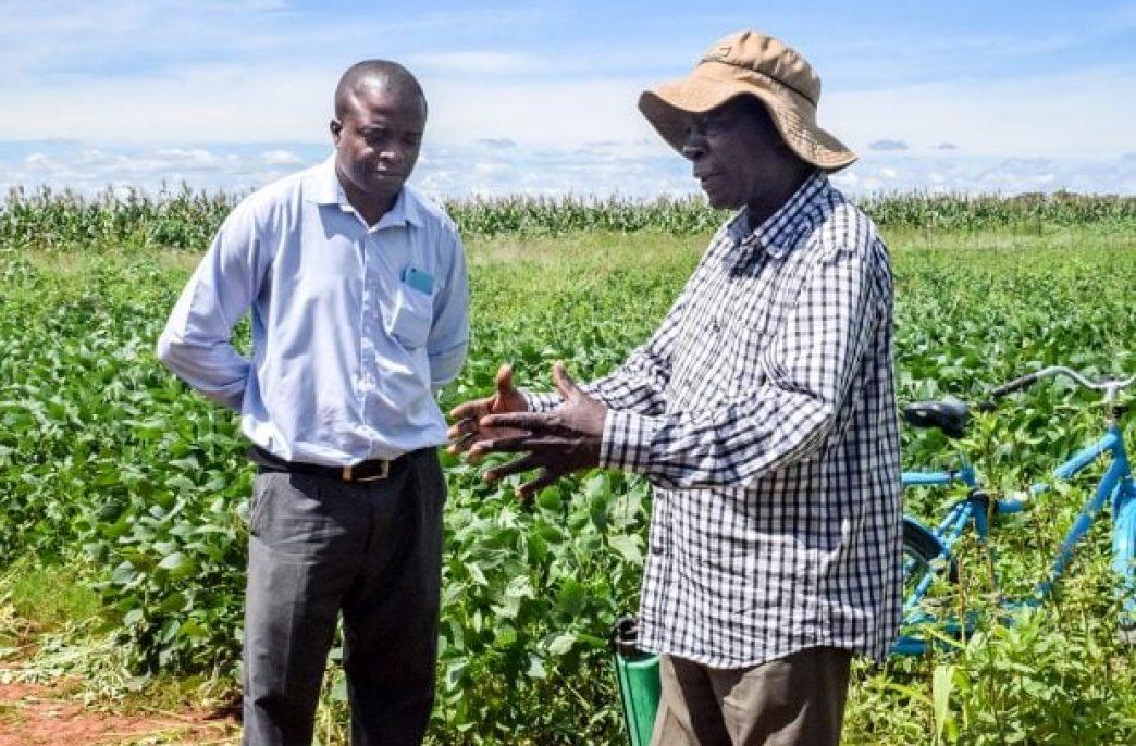 Зимбабве дало «зеленый свет» импорту удобрений