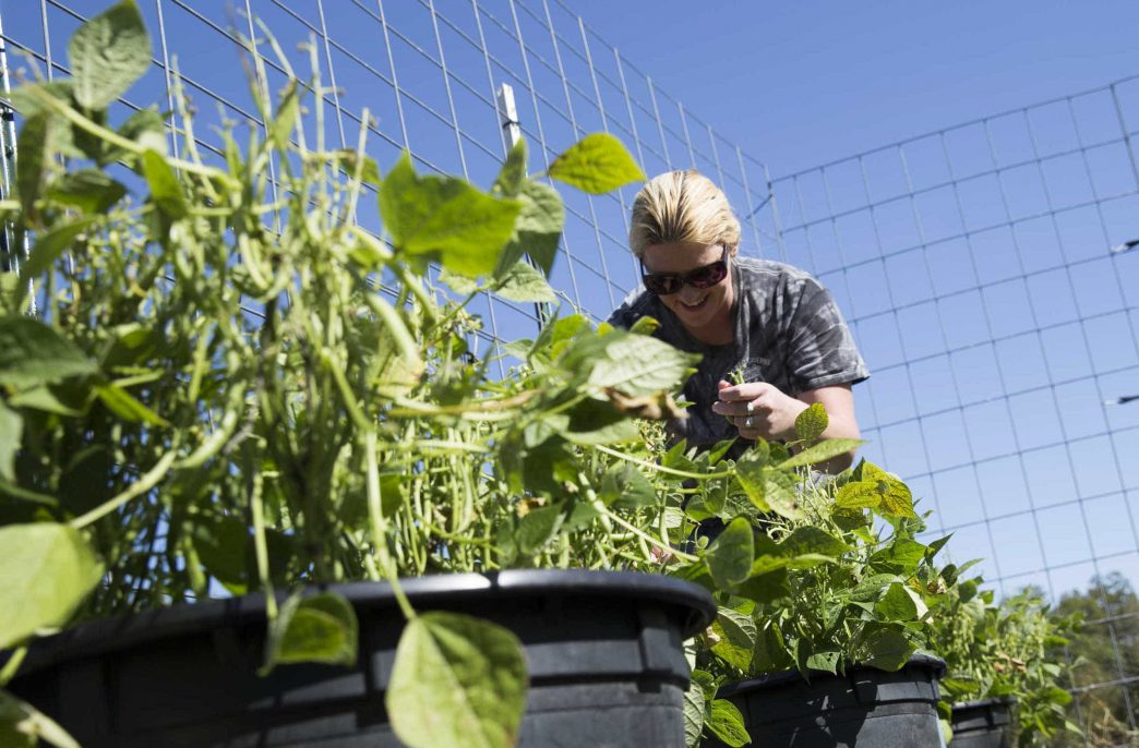 В Университете штата Миссури разрабатывают новое органическое удобрение, помогающее восстановлению почвы