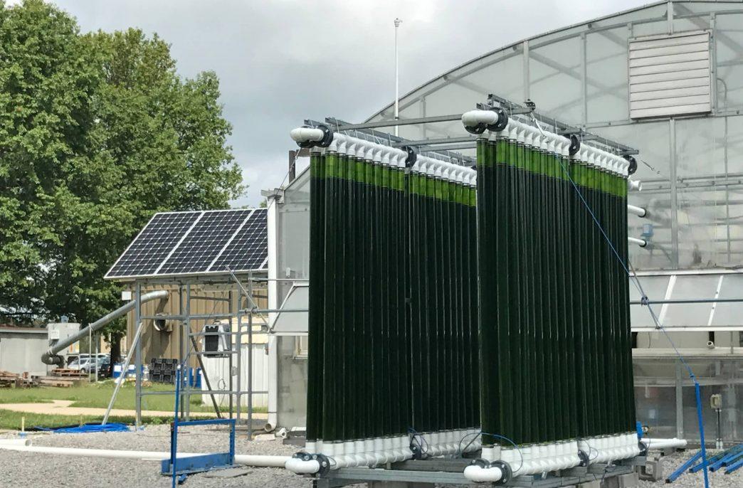 Удобрения из водяного пара и водорослей создадут в Университете штата Индиана