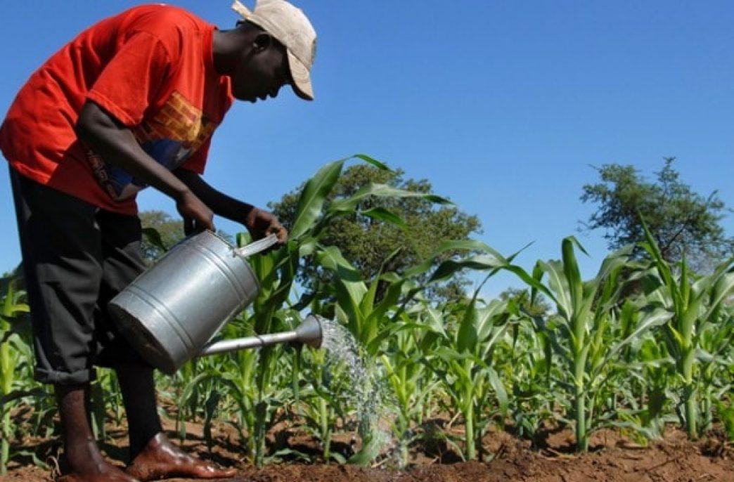 В Республике Гана коррумпированые власти лишают фермеров удобрений