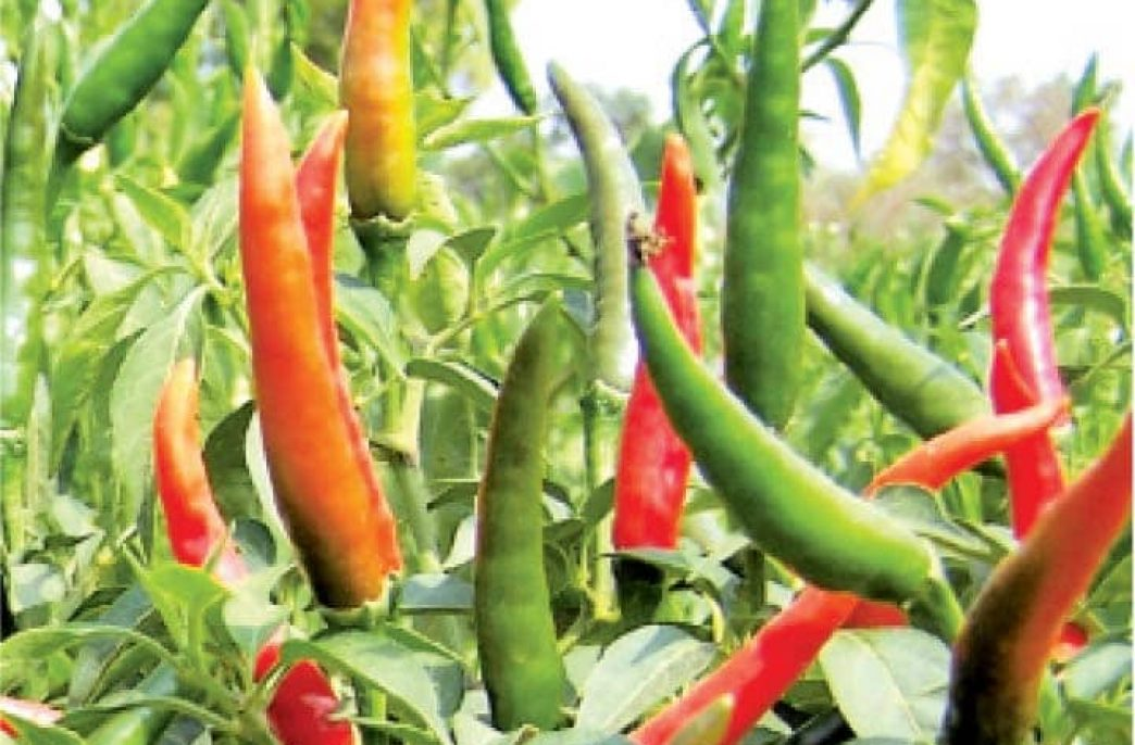 Создание органического удобрения и пестицида своими руками