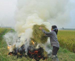 Сельскохозяйственные отходы лучше не сжигать