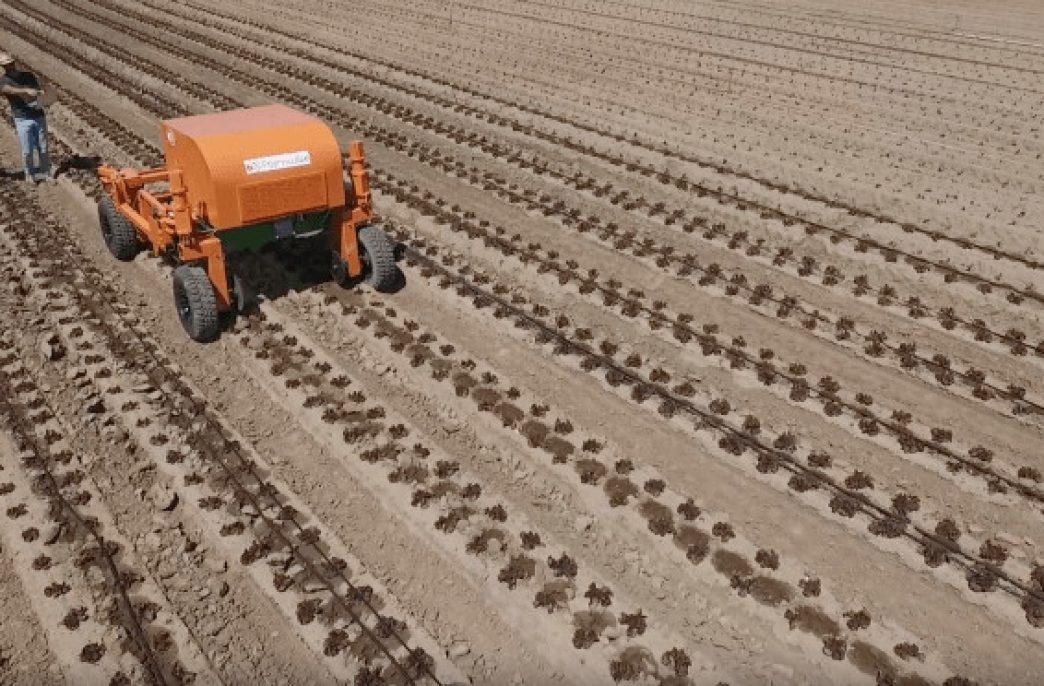 В США разработан робот по прополке полей