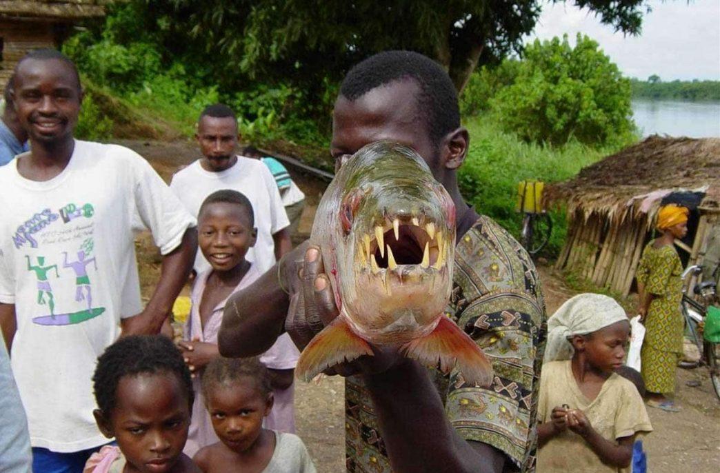 Kore Potash нашла кое-что в Конго