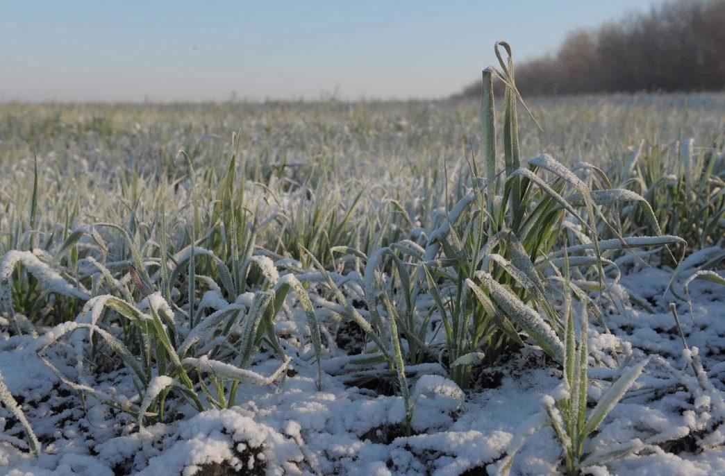 Рязанская область готовится к «новогоднему» урожаю