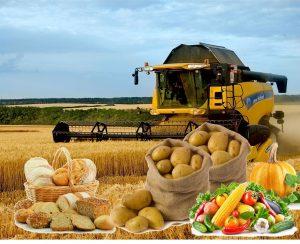 Сельское хозяйство Европейской России таит немало перспектив