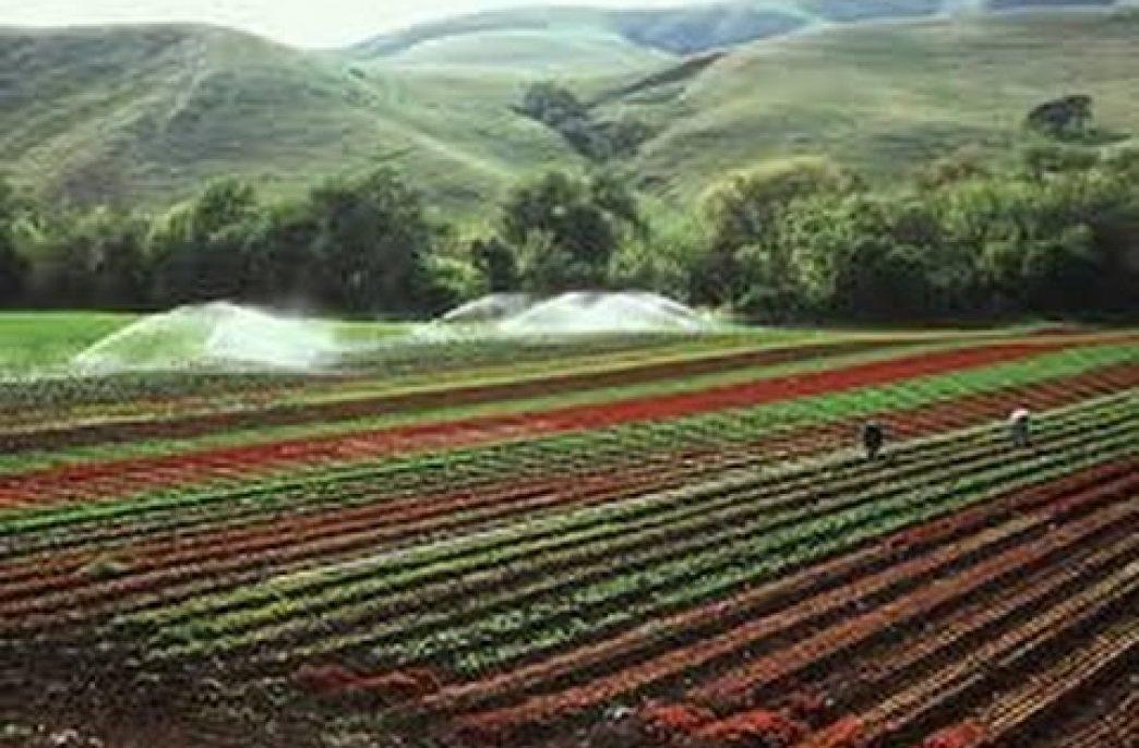 Власти Филиппин заставят аграриев соблюдать правила ВТО