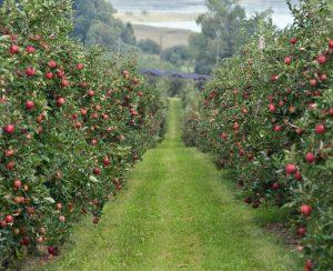 На Ставрополье расширят суперинтенсивные сады