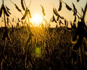 В штате Огайо проверили влияние азотных удобрений на урожайность сои