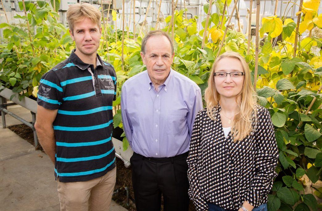Ученые ускорят рост растений фотосинтезом