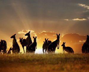 В Австралии укрепляется спрос на агрохимикаты
