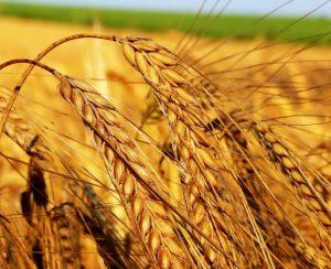 «ФосАгро» поддерживает сельское хозяйство Казахстана