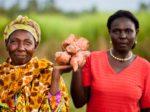 Toyotа захватывает рынок Кении