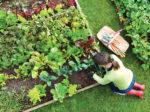 Россия заработает на органическом земледелии