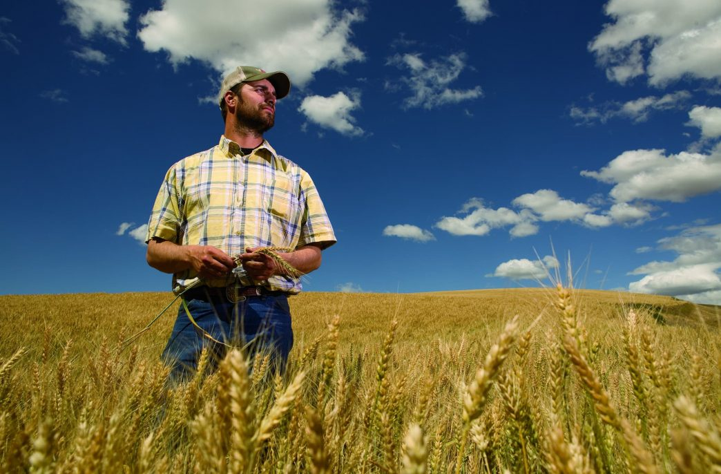 Wheat Growers увеличивает складские мощности