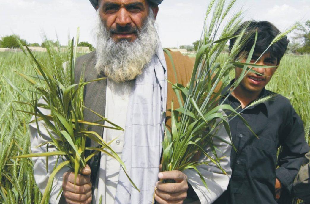Продажи удобрений в Пакистане растут как на дрожжах
