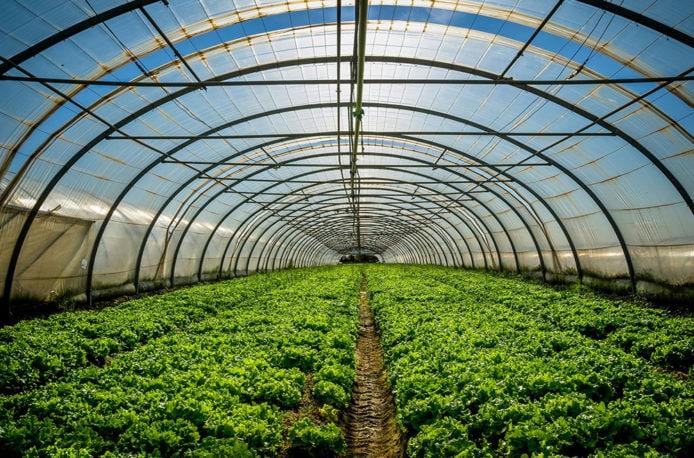 Кубань лидирует попроизводству тепличных овощей в Российской Федерации