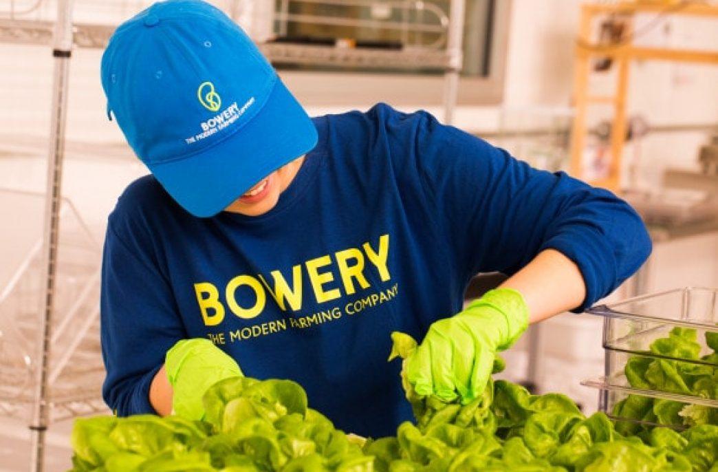 Bowery — овощи «под заказ»