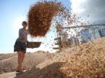 Тамбовская область нарастит экспорт зерна