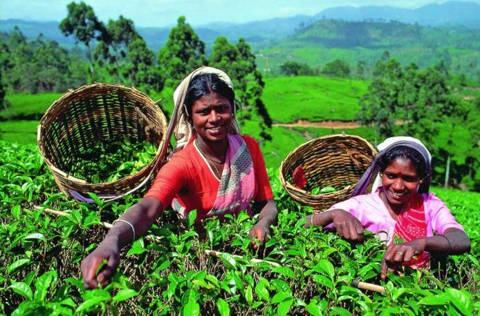 Дефицит агрохимикатов на Шри-Ланке сокращается