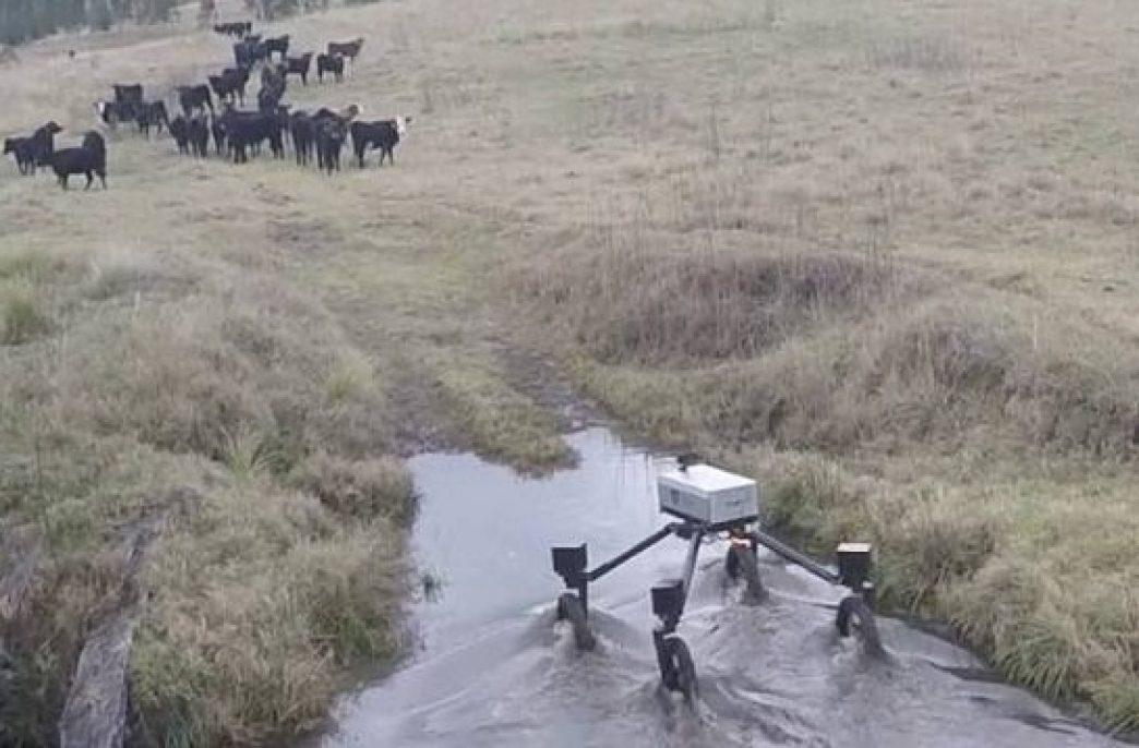 Робо-ковбой поможет фермерам с выпасом скота