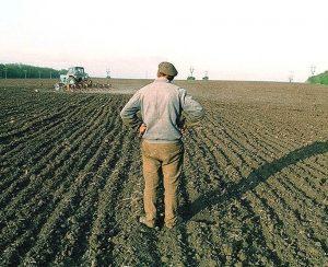 Забайкальских фермеров ожидают большие субсидии