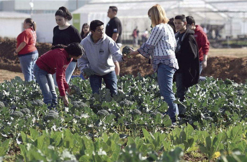 Американские школьники займутся сельским хозяйством