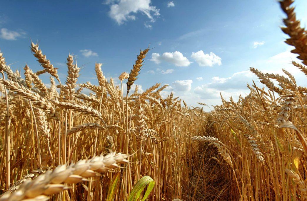 Рискованное земледелие — проектам не помеха