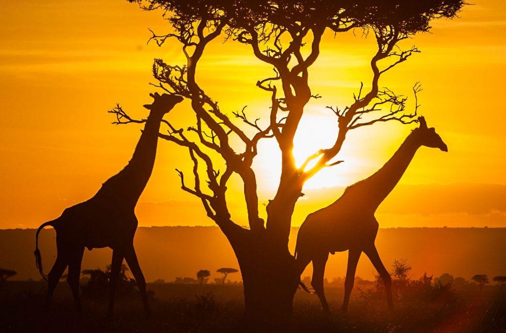 Кении не суждено стать продуцентом удобрений