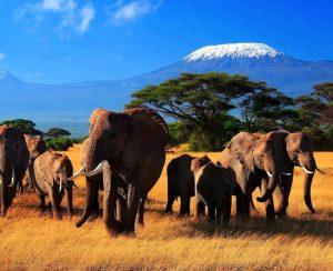 У Toyota появились любопытные планы в Кении