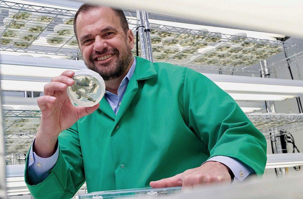 C4-фотосинтез накормит миллионы