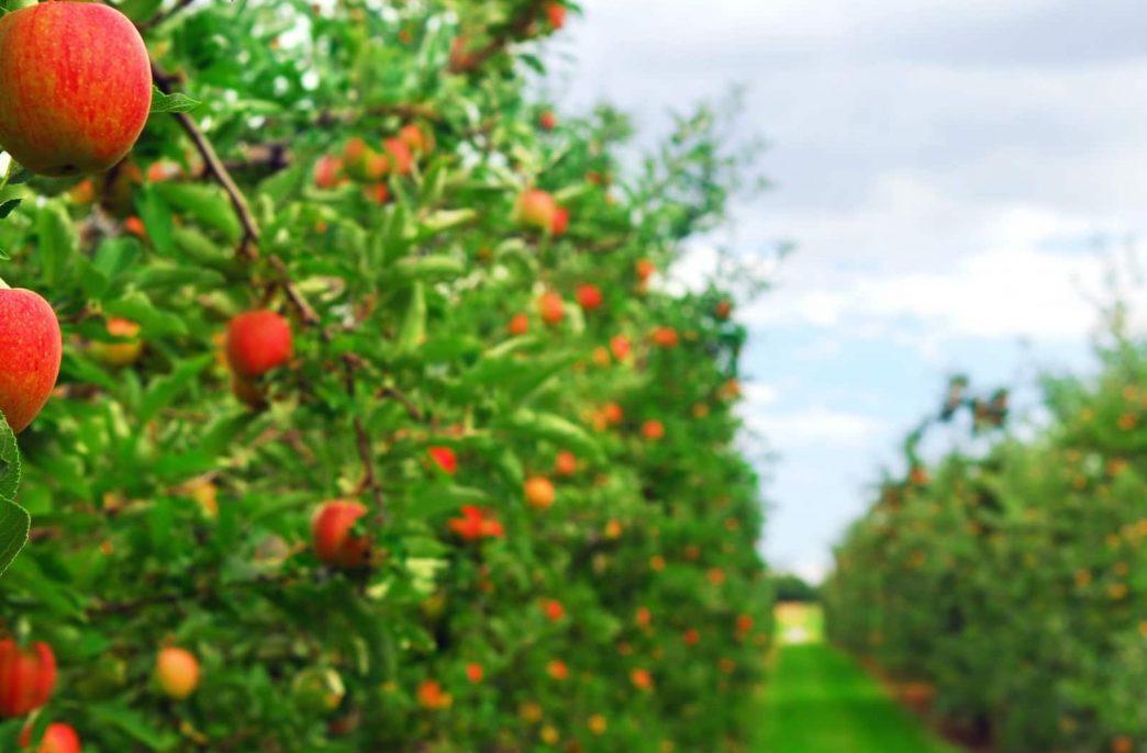 У промышленного садоводства — отличные перспективы