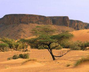 В Сенегале падает добыча фосфоритов