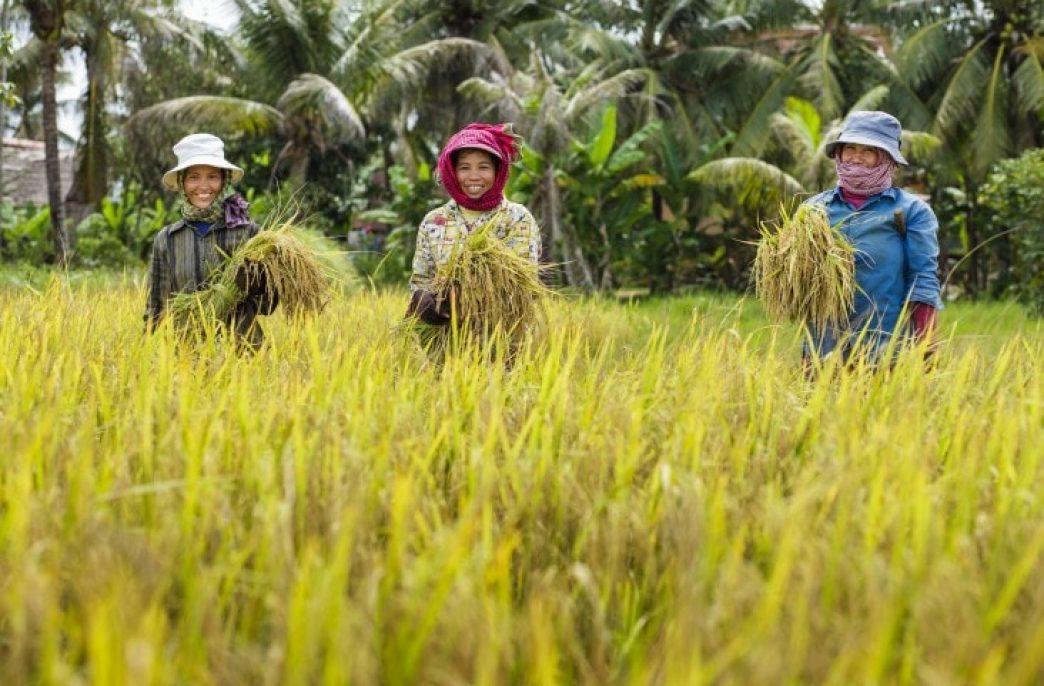 Камбоджа перенимает технологии точного земледелия