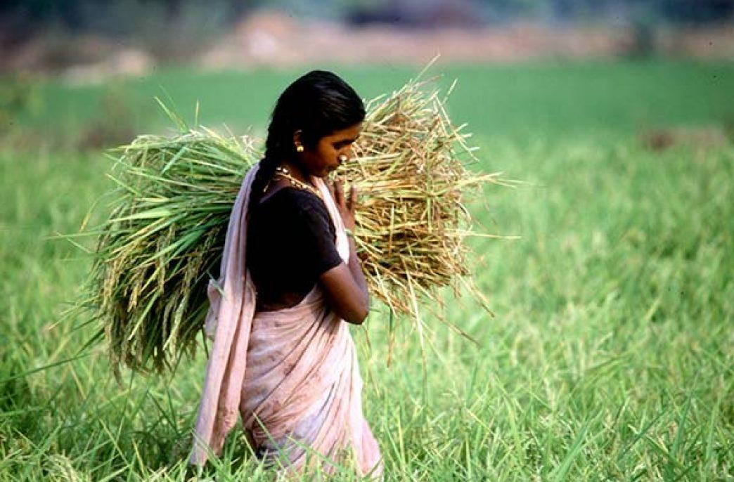 Новые мобильные приложения помогут фермерам Индии