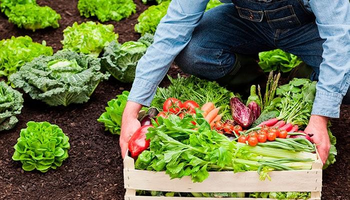 Органическое земледелие
