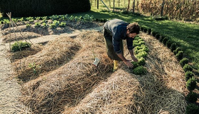 Удобрения для органического земледелия
